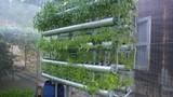 Trồng rau sạch không cần đất... 4 người ăn chỉ 300.000 đồng/tháng