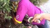 Video: Hai thanh niên Bắc Giang tay không bắt rắn hổ mang