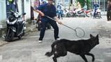 Tranh cãi kịch liệt việc Hà Nội ra quân bắt chó thả rông