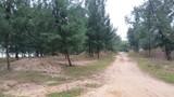 Cận cảnh rừng phòng hộ Quảng Xương bị tỉnh Thanh Hóa xóa sổ bởi 1 văn bản
