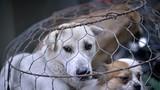 Từ 20/4/2021: Hành hạ tàn nhẫn vật nuôi... phạt đến 3 triệu đồng