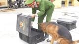 """Video: """"Chiến binh 4 chân"""" của công an Thủ đô hít vali tìm thuốc nổ"""