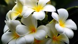 Video: Dâng các loài hoa này lên bàn thờ, cả năm ngập tràn tài lộc
