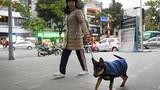 Mặc áo rét cho thú cưng trong trời lạnh 11 độ C
