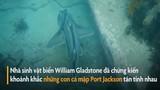 Video: Thích thú khoảnh khắc cá mập tán tỉnh nhau
