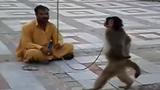 Con khỉ bá đạo nhất quả đất