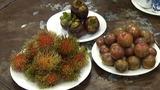 Dinh dưỡng không ngờ từ tục ăn quả chua Tết Đoan Ngọ