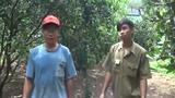 Chàng trai 20 tuổi thành triệu phú nhờ trồng quýt