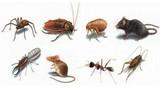 Mẹo diệt côn trùng hiệu quả không cần thuốc xịt