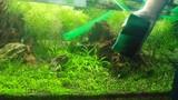 4 mẹo vệ sinh bể cá cảnh sạch và đẹp