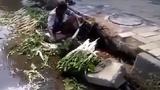 Phát hãi cảnh rửa rau bằng nước cống ven đường