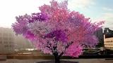 Cây có thể mọc được 40 quả khác nhau như trong Kinh Thánh