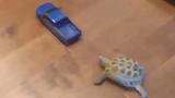 Cười ngặt nghẽo với hình ảnh rùa chạy đua với... ô tô