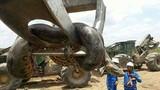 Cận cảnh con trăn nặng nửa tấn phải dùng cần cẩu để di chuyển