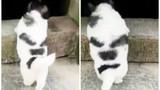 Hài hước cảnh cún con cố gắng trèo qua bậc cửa
