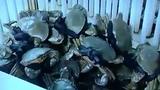 Lật tẩy chiêu thức móc túi trong kinh doanh cua biển