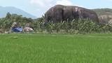 Bí ẩn ngôi làng liên tục bị sét đánh ở Khánh Hòa