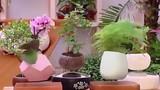Nghệ nhân bật mí cách tạo chậu bonsai bay tuyệt đẹp