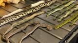Hết hồn gói hàng đựng hàng chục con rắn, nhện, bọ cạp tại sân bay