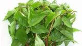 Những công dụng, bài thuốc chữa bệnh từ rau đay