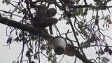 Video: Lạnh người xem lấy mật ong rừng như thời nguyên thủy
