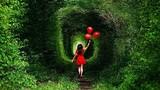 """Vẻ đẹp ma mị của """"đường hầm tình yêu"""" ở Ukraine"""