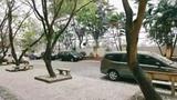Video: Những loài cây quý giá mọc... ven đường