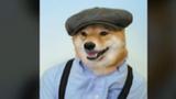 Chú chó có phong cách thời trang như tài tử Hollywood