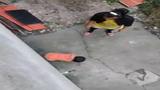 Clip mẹ đánh con dã man gây phẫn nộ