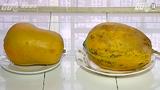 Mẹo phân biệt hoa quả thúc chín bằng hóa chất