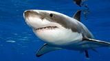 Nam Phi thử nghiệm công nghệ phòng tránh cá mập