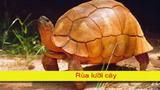 Clip: Khám phá 10 loài động vật cực hiếm trên thế giới