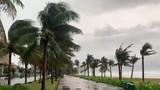 Video: Bão số 5 gây mưa lớn, cây gãy đổ ở Huế, Đà Nẵng