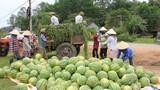 Đại biểu tâm tư chuyện được mùa, rớt giá và hiến kế giải cứu nông sản