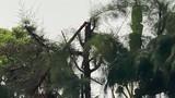 """Học sinh Hải Dương tỉa cây bị điện giật tử vong: Trường điều đi lao động...""""bằng miệng"""""""