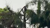 Học sinh bị điều đi cắt tỉa cây tử vong: Đề nghị kỷ luật Hiệu trưởng cùng cấp phó