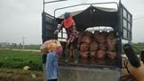 """Hải Dương chỉ đạo """"giải cứu"""" gần 100.000 tấn nông sản trong cách ly xã hội"""