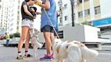 Con chó làm khó dân Sài Gòn!