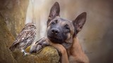 Ảnh đẹp: Tình bạn không biên giới giữa chó và cú mèo