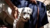 Chó sống sót kỳ diệu sau vụ cháy rừng kinh hoàng bằng cách thông minh