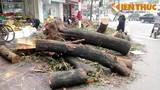 Chặt cây xanh HN: Khi dân không được hỏi, được bàn