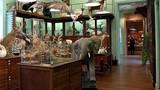 """Soi hàng """"kịch độc"""" trong những cửa hàng dị nhất thế giới"""