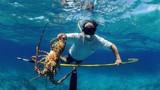 Tận mục công việc của những thợ lặn bắt tôm hùm