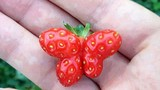 Ngỡ ngàng trước hình dáng kỳ quặc của các loại rau củ quả quen thuộc (1)