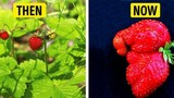 Sự khác biệt giữa hoa quả và rau củ xưa và nay