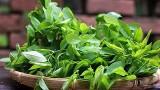 Những điều cấm kỵ khi ăn rau ngót tuyệt đối không thể bỏ qua
