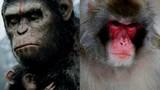 Những con khỉ đột biến gây sốc nhất