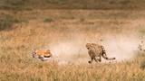 Kịch tính cuộc sống động vật hoang dã ở Tanzania