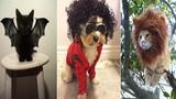 Cười sặc mỳ tôm với đám thú cưng diện trang phục Halloween
