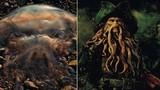 Kinh dị loài sứa khổng lồ trông như quái vật truyền thuyết